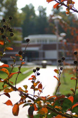 Click to enlarge,  Lee county campus in the fall.