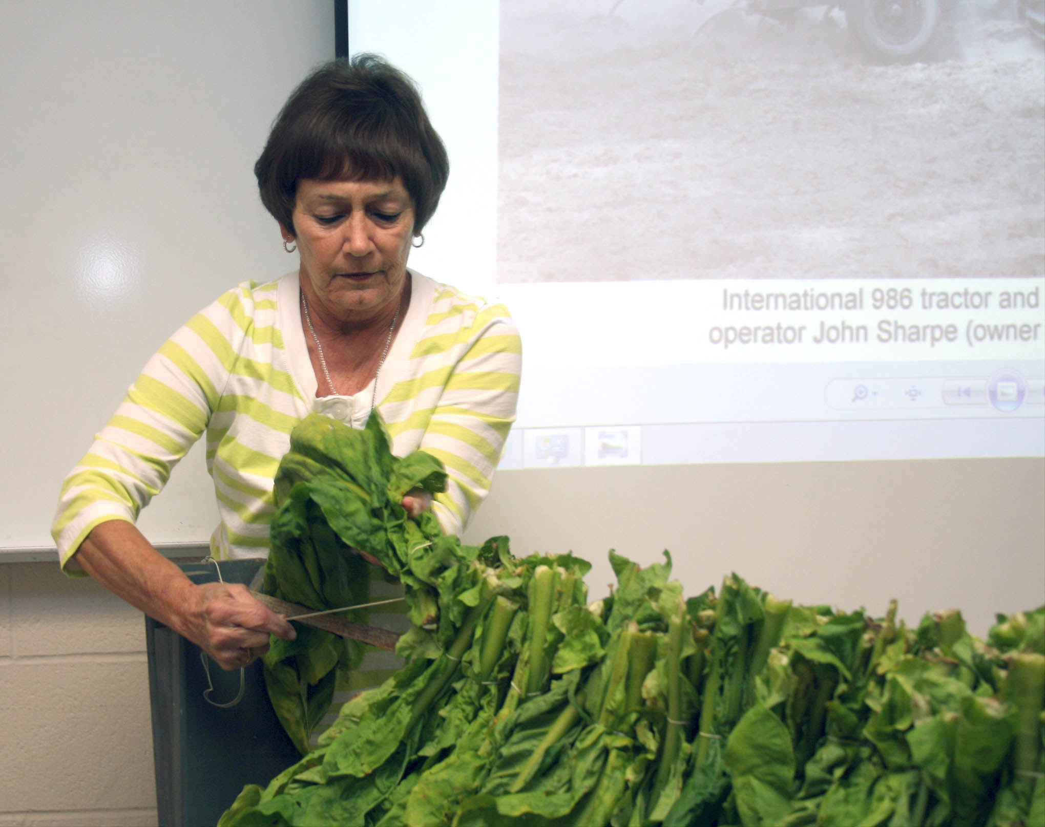 Read the full story, CCCC students learn about tobacco farming