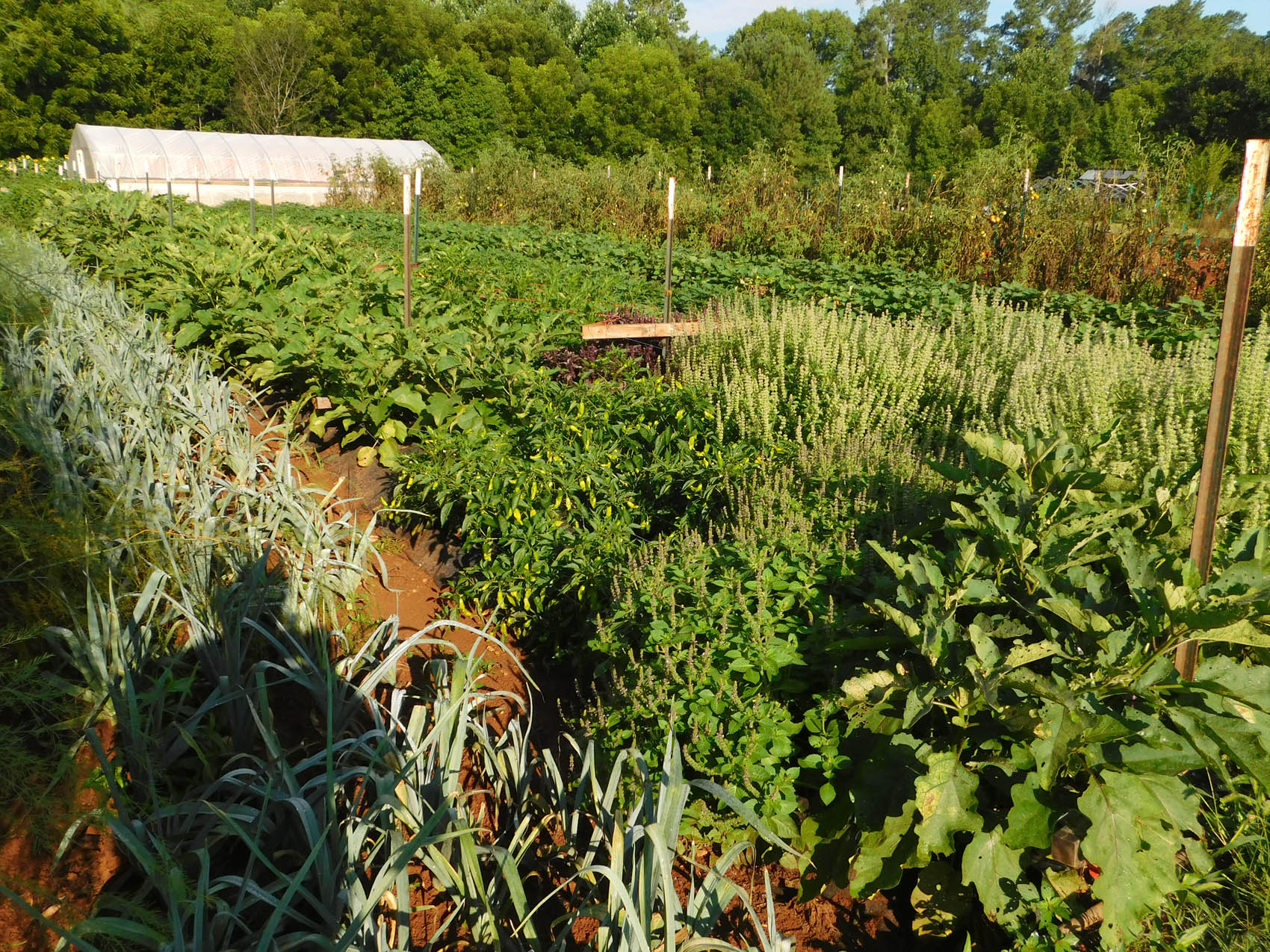 Read the full story, CCCC Sustainable Agriculture program is awarded grant
