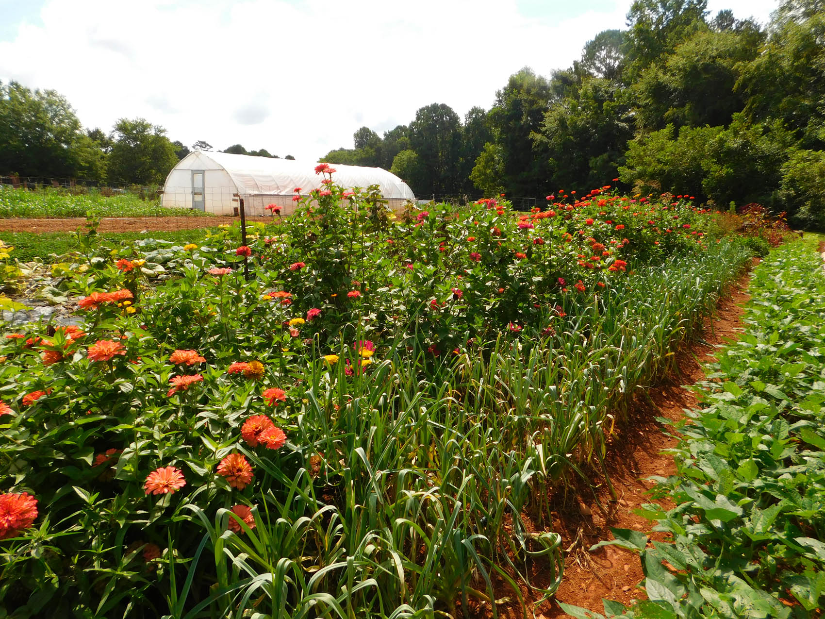 Click to enlarge,  CCCC's Student Farm on its Chatham Main Campus in Pittsboro ranks among the Top 20 best college farms in America, according to Best College Reviews.